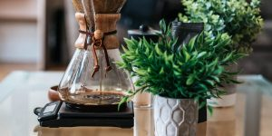 Chemex pour over coffee pot and artificial plants