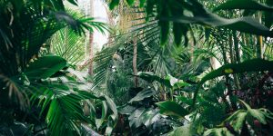 leafy jungle aesthetic