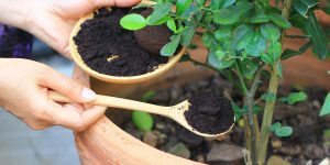 how-to-use-and-dispose-of-coffee-grounds