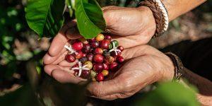 what-is-fair-trade-coffee