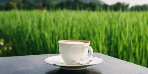 whats-organic-coffee-and-is-it-better